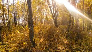 Гуляя с собакой в лесу... Осень листья, капельки дождя...