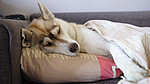 Опять немного спящей Тёти Хаси... ;)